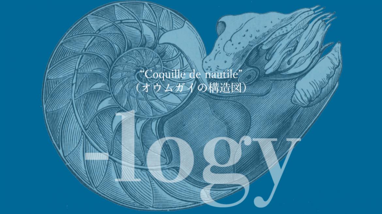 """Coquille de nautile"" 「オウムガイの構造図」"