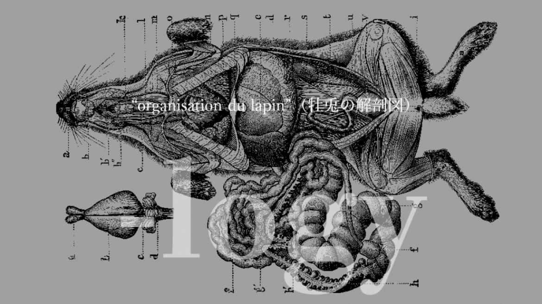 """""""organisation du lapin"""" 牡兎の解剖図"""
